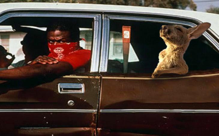 Batalla Photoshop canguro - en carro con malas compañías