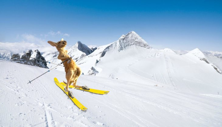 Batalla Photoshop canguro - esquiando