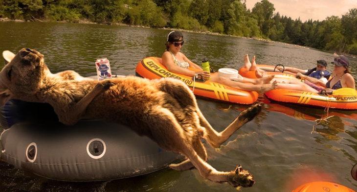 Batalla Photoshop canguro - relajándose en el lago