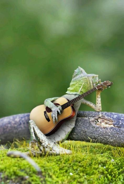 Batalla PS lagartija - con guitarra