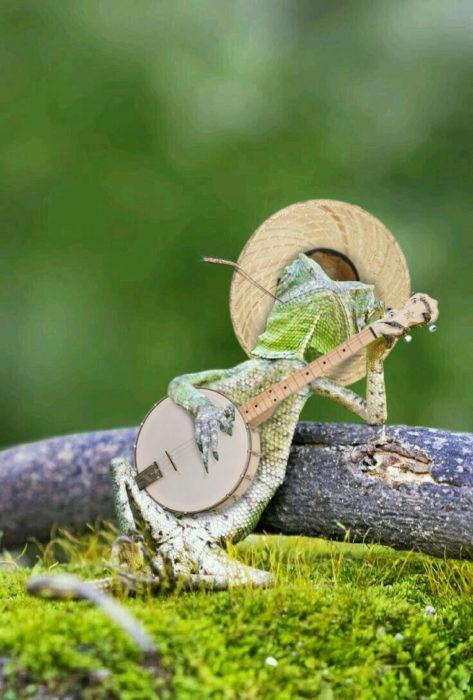 Batalla PS lagartija - tocando el banjo con sombrero