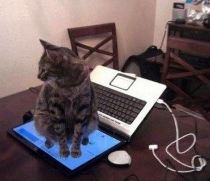gato sentado sobre una laptop