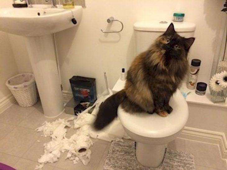 gato papel de baño