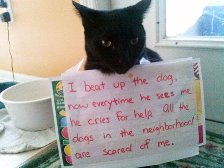 letrero gato vecino