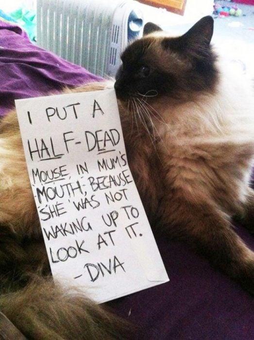 gato letrero ratón muerto
