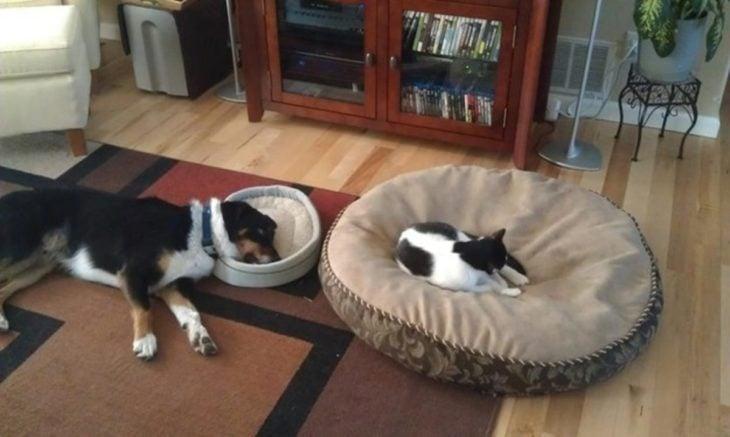 Gato acostado en la cama del perro