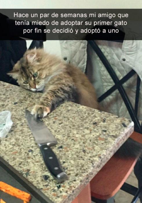 Snapchat gato adoptado jugando con cuchillo