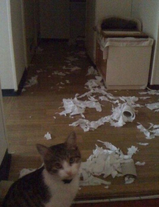 Gato destruyó todo el papel