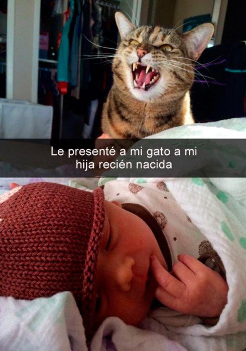 Snapachat gato conoce a bebé