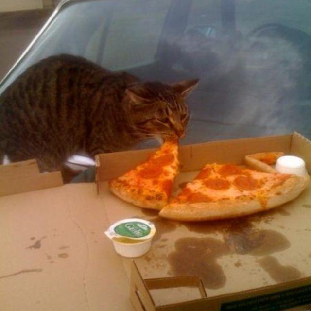 gato comiéndose la pizza