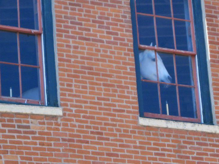 Imágenes inexplicables - caballo adentro de edificio