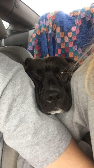 Perro asomado en el carro para adelante