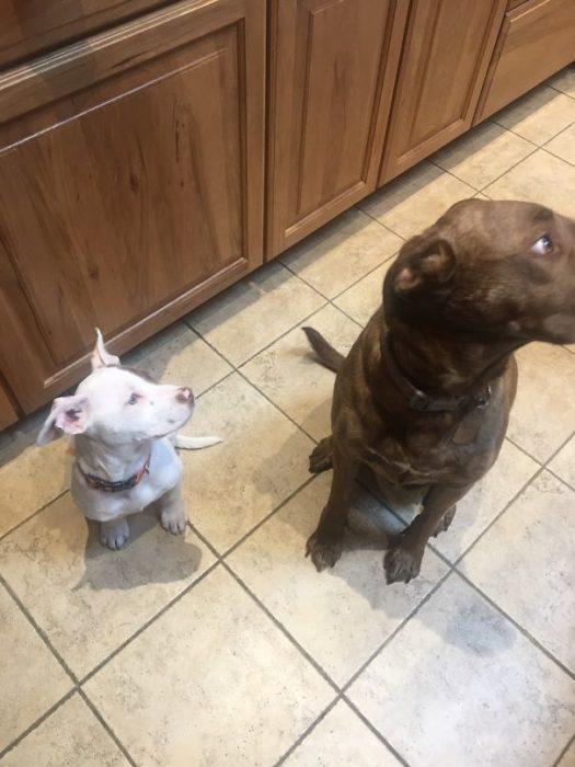 Perros volteando para otro lado