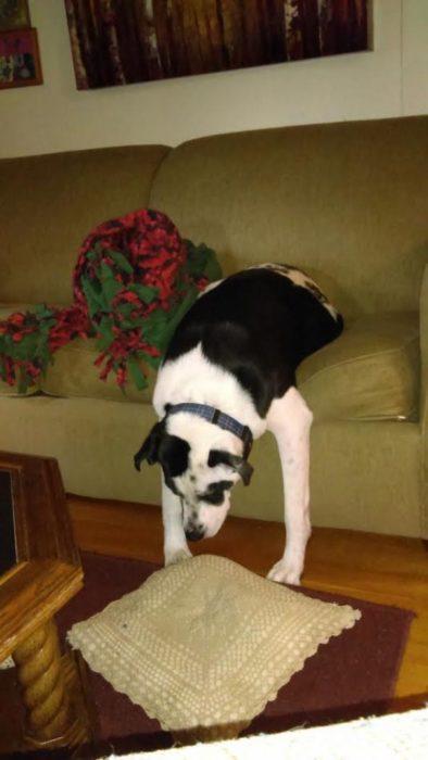 Perro en el sillón con las patas delanteras en el piso