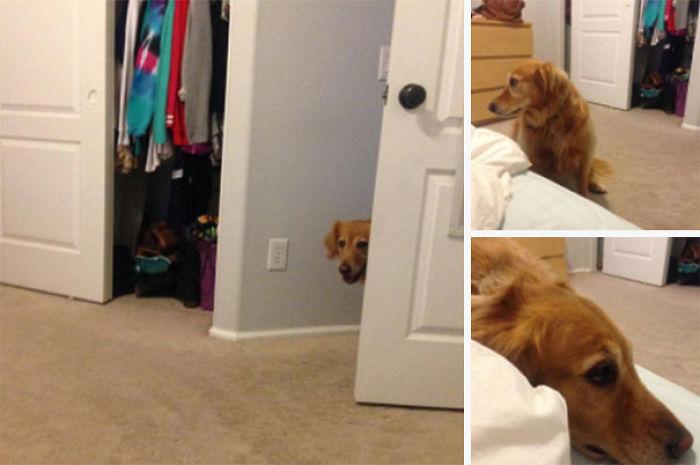 Perro entra al cuarto sigilosamente