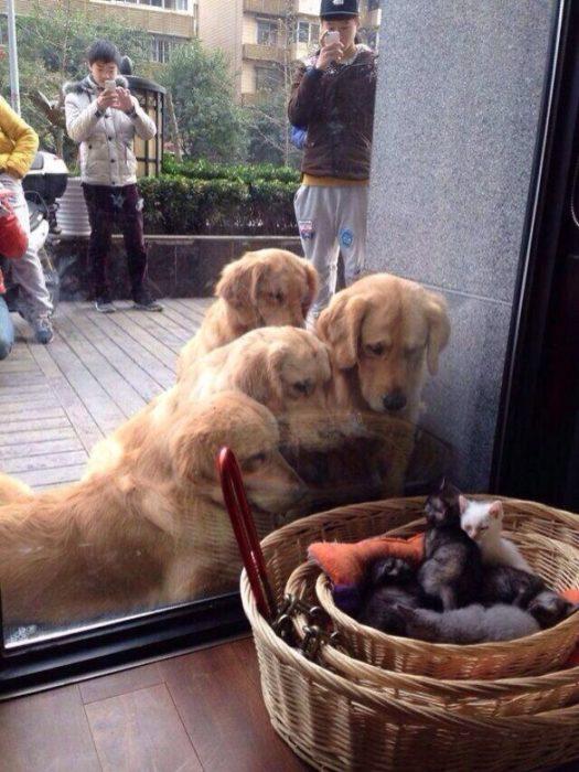 viendo gatitos