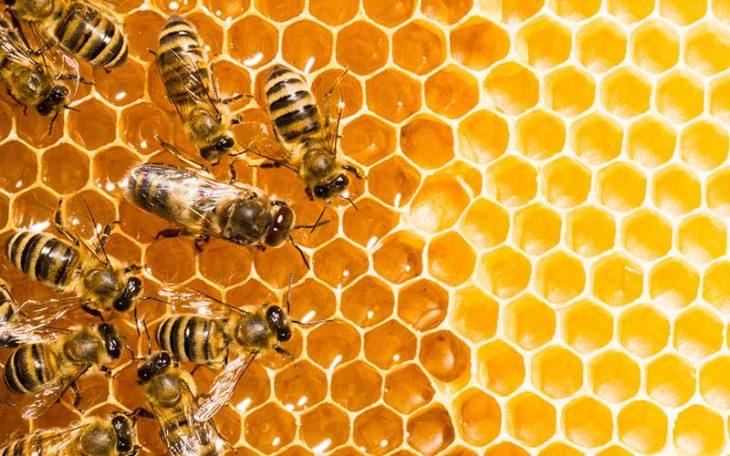 panal de abejas colmena