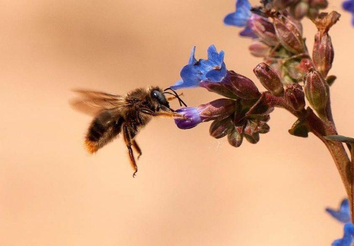 abeja comiendo flor miel