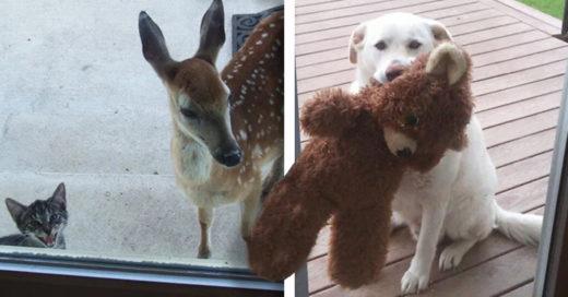 Cover Animalitos ansiosos por entrar a su casa