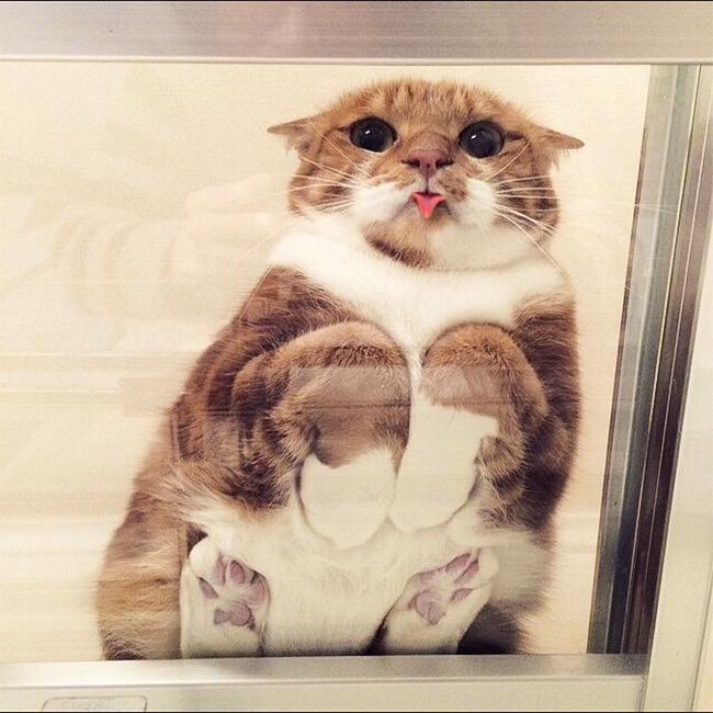 esta gato es demasiado tierno