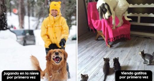 Cover Veces que los animales hicieron algo por 1ª vez y reaccionaron de forma divertida