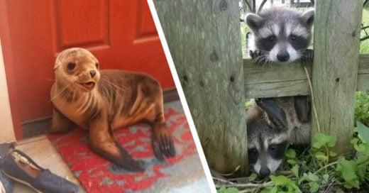Cover Animalitos que solo pasaron a saludar y se sintieron como en su casa