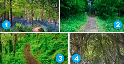 Cover Dinos cuál de estos 6 caminos te gusta más y te dirémos cómo eres