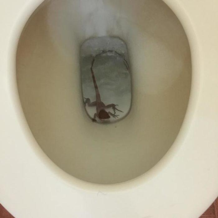 lagartija en el wc