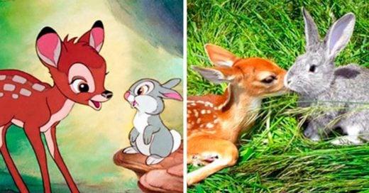 Cover animales que son iguales a tus personajes favoritos