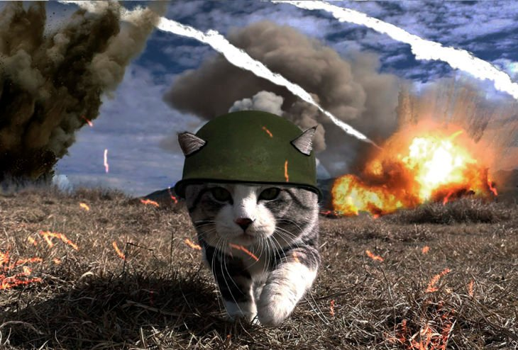 gato editado con casco militar en zona de guerra