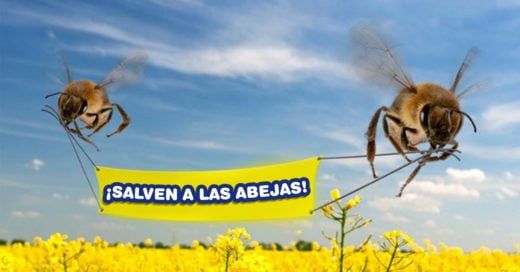 Cover Comprobado: se están extinguiendo las abejas, los humanos moriremos de hambre