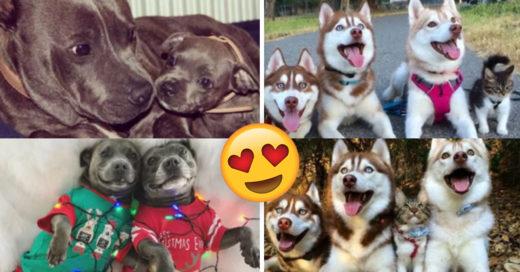 Cover Antes y después de animales que crecieron juntos