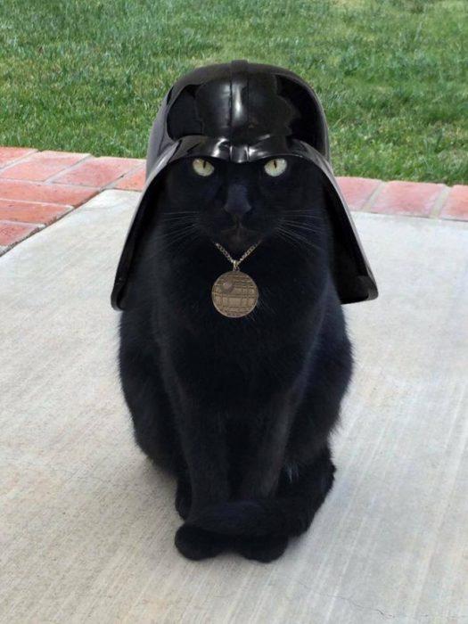 catvader