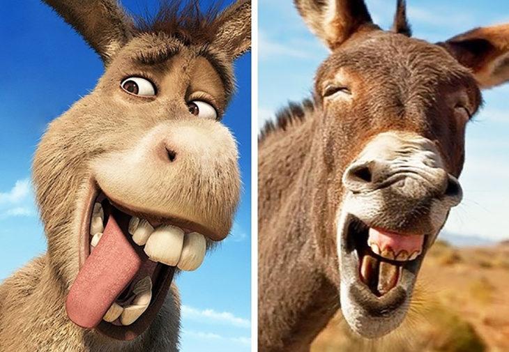 burro de shrek en la vida real