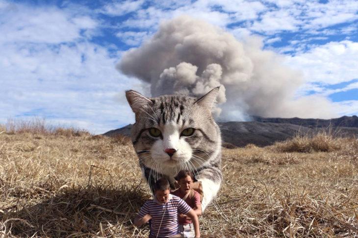 humanos editados pequeños frente a un gato