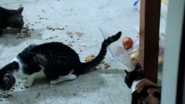 gatos comiendo desde el piso