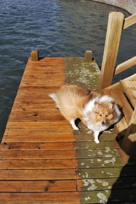 perrito madera bahía limpieza