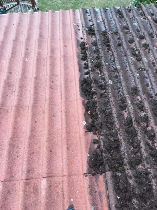 techo mugre antes y después