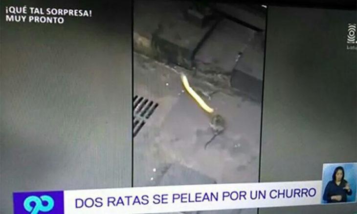 noticia sobre dos ratas que se pelean por un churro
