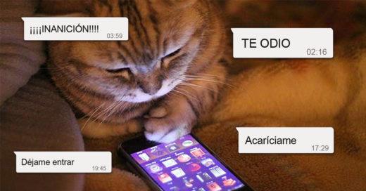 Cover Divertídisimos whatsapps que tu gato te enviaría si pudiera