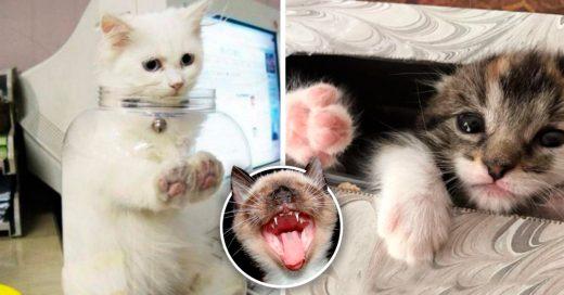 Cover Veces en que a los gatos no les importó el sentido común