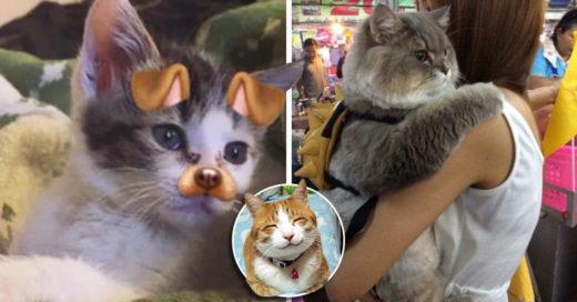 Cover razones por las cuales los gatos son casi humanos