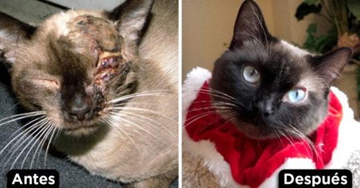 Cover Gatitos antes y después de ser rescatados