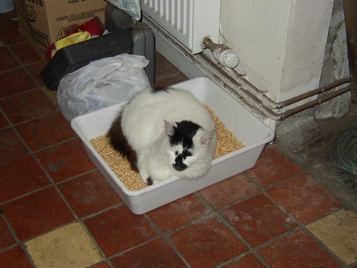 gato caja de arena