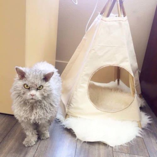 gato enojado alfombra