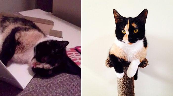 Eleonor la gatita