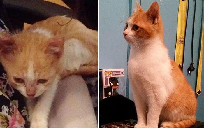 Oliver gato