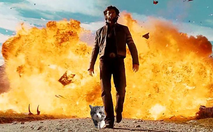 gato editado al lado de hugh jackman