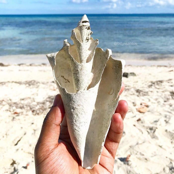 perfección concha de mar