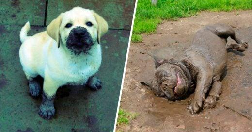 Cover razones para dejar que tu perro juegue en el lodo